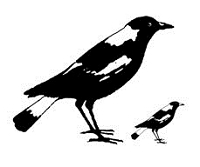 B-Line Designs - Cling Stamp - Magpies
