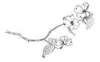 B-Line Designs - Cling Stamp - Flowering Branch