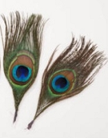 Darice-Peacock Feathers