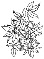 Darice Embossing Folder - (A2 size) -  Loose Flora