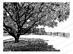 Impression Obsession - Cling Mounted Rubber Stamp - By Tara Caldwell - Country Lane