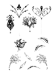Impression Obsession Clear Stamp - Flowers