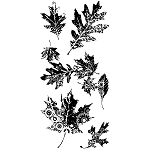 Inkadinkado Clear Stamps - Leaves Galore