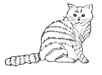 Magenta - Cling Rubber Stamp - Tabby Cat