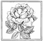 Northwoods Rubber Stamp Single Rose