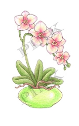 Pink Ink - Wood Mounted Rubber Stamp - Graceful Orchids