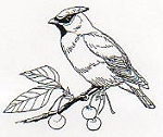 Rubber Stamp Avenue-Cling Stamp-Bird on Branch
