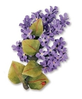 Sizzix Thinlits - Dies - by Susan Tierney-Cockburn - 5 Pack - Flower, Lilac