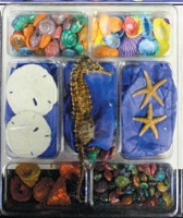 Sealife/Shell Collection