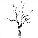 "The Crafter's Workshop 12""x12"" Stencil - Shadow Tree"