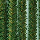 Darice-12mm Chenille Stems-Canadian Pine