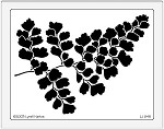 Dreamweaver Jumbo Metal Stencil - Maidenhair Fern
