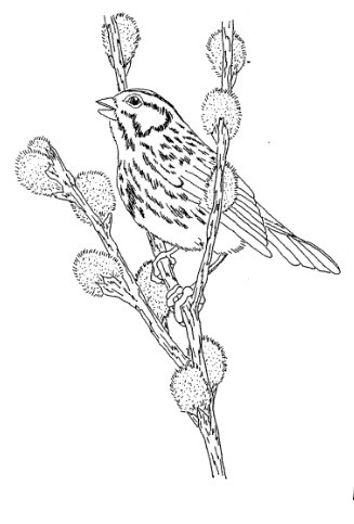 Frantic Stamper Cling-Mounted Rubber Stamp - Bird on Pussywillow