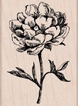 Hero Arts - Wood Mounted Rubber Stamp - Classic Tea Flower