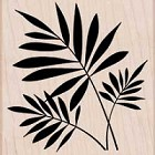 Hero Arts-Wood Mounted Rubber Stamp-Three Ferns