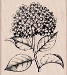 Hero Arts-Wood Mounted Rubber Stamp-Hydrangea