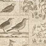 K & Co. Engraved Garden Bird Shimmer Vellum