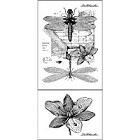 LaBlanche Silicone Stamp - Dragonflies