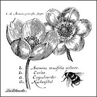 LaBlanche Silicone Stamp - Anemonies
