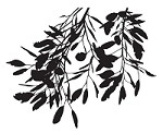 Magenta - Cling Rubber Stamp - Branch Silhouette