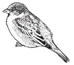 Magenta - Cling Rubber Stamp - Sparrow