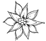 Magenta - Cling Rubber Stamp - Doodle Poinsettia 1