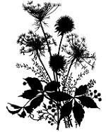 Magenta - Cling Rubber Stamp - Wildflowers