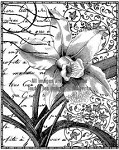 Magenta-Cling Stamp-Orchid