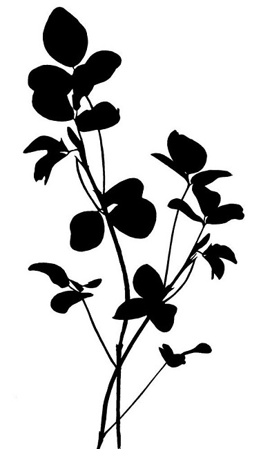 Magenta Cling Rubber Stamp Clover Silhouette