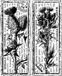 Magenta-Cling Stamp-Thistle Duo Collage