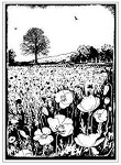 Magenta-Cling Stamp-Field Of Poppies