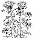 Northwoods Rubber Stamp -Thistle & Black-eyed Susans