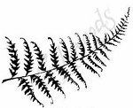 Northwoods Rubber Stamp -Solid Fern Leaf
