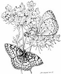 Northwoods Rubber Stamp Queen Anne's Lace w/ 2 Butterflies