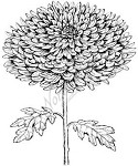 Northwoods Rubber Stamp -Giant Mum Stem