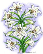Northwoods Rubber Stamp Large Easter Lilies