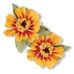 Sizzix Thinlits - Dies - by Susan Tierney-Cockburn - 7 Pack - Flower, Zinnia