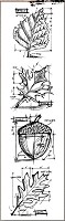 Stamper's Anonymous / Tim Holtz - Cling Mounted Rubber Stamp Set - Mini Blueprints Autumn