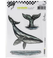 Carabelle Studio - Cling Stamp - Le Chant des Baleines by Alexi