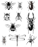 Art Journey - Unmounted Rubber Stamps - Insects