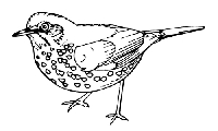 B-Line Designs - Cling Stamp - Spotted Bird