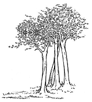 B-Line Designs - Cling Stamp - Tree Grove