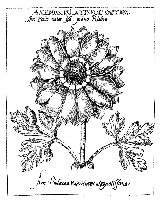 B-Line Designs - Cling Stamp - Anemone