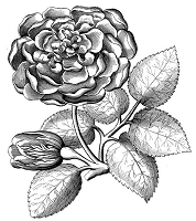 B-Line Designs - Cling Stamp - Garden Rose