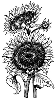 Art-Kure EZMount Stamp - by Mike Gross - Sunflower