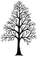 Frantic Stamper Cling-Mounted Rubber Stamp - Med Naked Tree