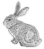 Frantic Stamper Cling-Mounted Rubber Stamp - Bunny
