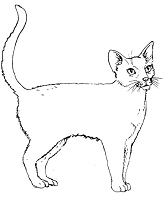 Frantic Stamper Cling-Mounted Rubber Stamp - Lg White Cat