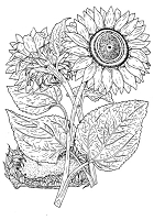 Frantic Stamper Cling-Mounted Rubber Stamp - Sunflower