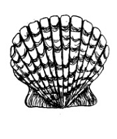 Frantic Stamper Cling-Mounted Rubber Stamp - Shell